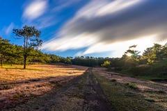 22, Otc, 2016 - o nascer do sol, a nuvem beatyful e a grama cor-de-rosa na floresta do pinho em Dalat- Lam o dong Vietname Imagem de Stock Royalty Free