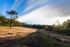 22, Otc, 2016 - o nascer do sol, a nuvem beatyful e a grama cor-de-rosa na floresta do pinho em Dalat- Lam o dong Vietname Foto de Stock