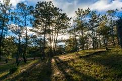22, Otc, 2016 - sol en la hierba en bosque del pino en la fuga Dong Vietnam de Dalat- Foto de archivo