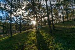 22, Otc, 2016 - sol na grama na floresta do pinho no dong Vietname do Lam de Dalat- Fotografia de Stock