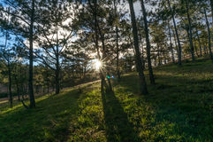 22,Otc,2016 -sun on the grass in pine forest in Dalat- Lam Dong- Vietnam Stock Photography
