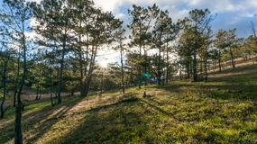 22,Otc,2016 -sun on the grass in pine forest in Dalat- Lam Dong- Vietnam Stock Image