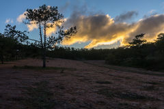 22,Otc,2016 - The Sunrise, the beatyful cloud and pink grass in pine forest in Dalat- Lam Dong- Vietnam Royalty Free Stock Images