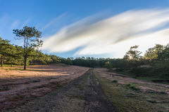 22,Otc,2016 -The Sunrise, the beatyful cloud and pink grass in pine forest in Dalat- Lam Dong- Vietnam Stock Image