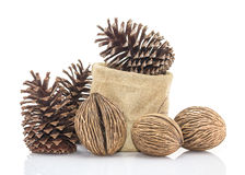 Othalanga - Suicide tree seed and cedar pine cone in sacks fodde Stock Images
