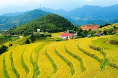 Other corner of terraced fields in Che Cu Nha Stock Images