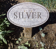 The Other Silver. Wood sign engraved with lettering marking silver foliage no, not the ore growing in a flower garden stock images
