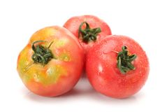 For other uses, see Tomato disambiguation. The tomato etymology and pronunciation is the edible, often red fruit/berry of the. Nightshade Solanum isolated on stock photography