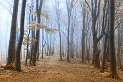 Other worldly foggy forest Royalty Free Stock Image