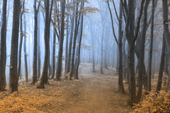 Other worldly foggy forest Royalty Free Stock Photos