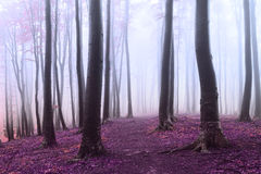 Other worldly misty forest with dark trees Royalty Free Stock Photo