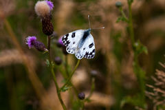 Otherness. Black-white butterfly and wild flowers on the field Stock Photo