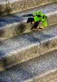 Otimismo ambiental Imagem de Stock Royalty Free
