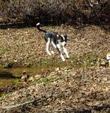 Otis lądowanie Fotografia Royalty Free