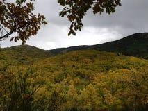Otoño y bosques obrazy royalty free