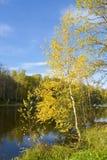 Otoño, árbol de abedul en el lago Foto de archivo