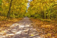 Otoño, árboles del otoño en el parque, camino, con la gente en la distancia Imagen de archivo libre de regalías