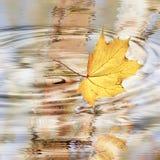 otoño Fotos de archivo