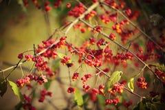 otoño Fotografía de archivo