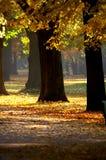 otoño Foto de archivo libre de regalías