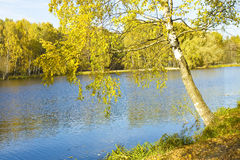 Otoño, abedul cerca del lago Imagenes de archivo