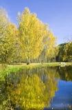 Otoño, abedules y lago Imágenes de archivo libres de regalías