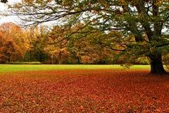 Otoño, alfombra roja en el parque. foto de archivo