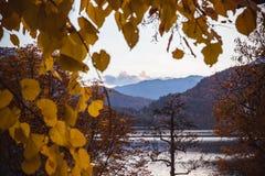 Otoño amarillo de las hojas en el lago Bled en Eslovenia con objeto de la isla imágenes de archivo libres de regalías