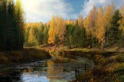 Otoño amarillo en el río imagen de archivo