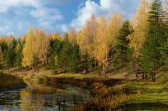 Otoño amarillo en el río imágenes de archivo libres de regalías