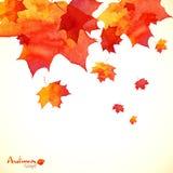 Otoño anaranjado pintado acuarela de las hojas de arce Foto de archivo libre de regalías