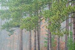 Otoño, bosque de Kellogg imagen de archivo libre de regalías
