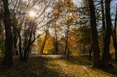Otoño brillante domingo en el parque Fotos de archivo libres de regalías