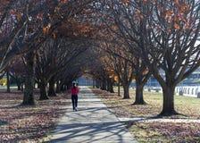 Otoño. Burley Griffin Lake. Canberra. Australia Imagen de archivo libre de regalías