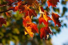 Otoño-Caen las hojas Fotografía de archivo