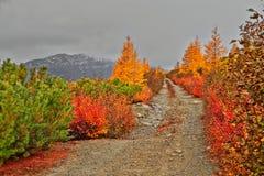 Otoño Camino a las montañas fotos de archivo libres de regalías