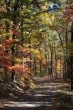 Otoño colorido Foto de archivo libre de regalías