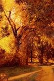 Otoño colorido Imagen de archivo libre de regalías