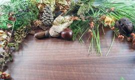 Otoño colorido con las hojas, conos del pino, castañas, nuez Foto de archivo