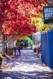 Otoño colorido en Hahndorf Main Street, sur de Australia fotos de archivo libres de regalías