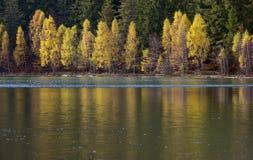 Otoño con el follaje amarillo, reflejado en el lago Fotos de archivo libres de regalías