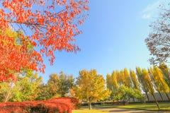 Otoño de Japón, las hojas de otoño hermosas de Obuse parquean, las RRPP de Nagano Imagenes de archivo