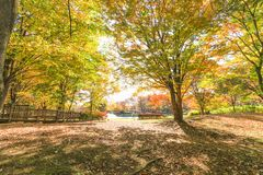 Otoño de Japón, las hojas de otoño hermosas de Obuse parquean, las RRPP de Nagano fotos de archivo