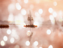 Otoño de la madrugada en el lago de la montaña en la atmósfera soñadora, árbol en la isla en centro Fotografía de archivo
