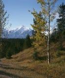 Otoño de la montaña rocosa. Fotografía de archivo