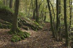 Otoño de la pista de senderismo del bosque Foto de archivo