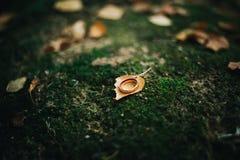 Otoño de las hojas de los anillos de bodas de los detalles Fotos de archivo libres de regalías