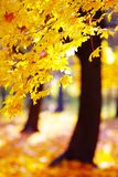 Otoño de oro en el bosque Imagen de archivo libre de regalías