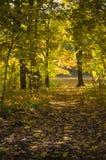 Otoño de oro en el bosque foto de archivo libre de regalías
