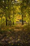 Otoño de oro en el parque, un día soleado imágenes de archivo libres de regalías